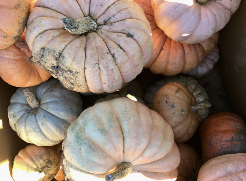Pumpkins+get+you+into+the+mood+of+Halloween%21