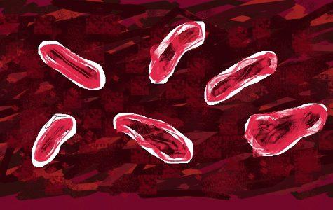 The bubonic plague bacteria.