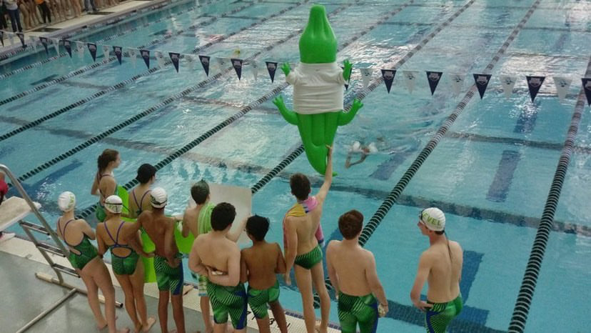 Gator's swimming team look on!