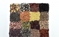 Diverse Bean Blend Resemble Medley of Influences in Contemporary Culinary Culture.